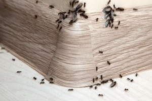 Bed Bugs, Pest Control in Regent's Park, NW1. Call Now 020 8166 9746