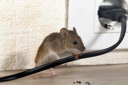 Pest Control in Regent's Park, NW1. Call Now! 020 8166 9746