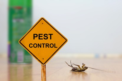 Pest Contol in Regent's Park, NW1. Call Now 020 8166 9746